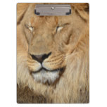 Adorable Lion Clipboard