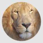 Lion Images Sticker