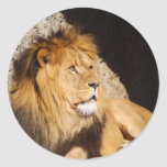 Lion Photo Sticker