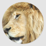 Lion with Thick Mane Stickers
