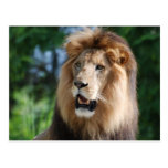 Regal Lion Postcard